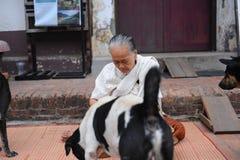 De oude vrouwen geven voedsel aan honden Stock Foto