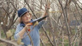 De oude vrouwentuinman die zaag voor het zagen van boom gebruikt vertakt zich terwijl het tuinieren het werk stock videobeelden