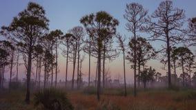De oude zonsopgang van Florida royalty-vrije stock foto