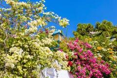De ouderwetse die straatlantaarn door een overzees van oleanders wordt omringd bloeit in Sidi Bou Said, Tunesië stock foto