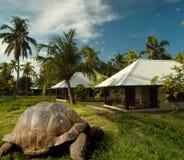 De oudste schildpad van de wereld op schateiland Royalty-vrije Stock Foto's