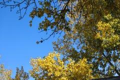 De outono das folhas estudo em direção ao céu nos contrastes fotografia de stock royalty free