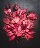 De outono das folhas vida vermelha ainda no fundo escuro, vista superior Folhas da queda Fotos de Stock Royalty Free