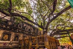 30 de outubro de 2014: Árvore de Bodhi, onde a Buda alcançou Nirva Fotografia de Stock