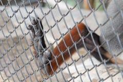 4 de outubro, dia do animal do mundo Imagens de Stock Royalty Free