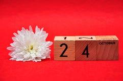 24 de outubro em blocos de madeira com uma margarida branca fotografia de stock royalty free