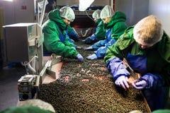 04 de outubro de 2017 - Vinnitsa, Ucrânia Povos no trabalho no prote Fotos de Stock