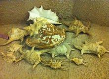 De overblijfselen van shells Stock Afbeelding