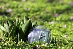 De overgang naar de zomertijd, de aankomst van de lente, de klok op het groene de lentegras naast de jonge onontloken tulpenbloem stock foto