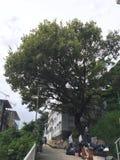 De overheid doodt de 100 éénjarigenboom Royalty-vrije Stock Afbeeldingen