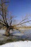 De overstroming van de winter Royalty-vrije Stock Foto