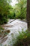 De overstroming van het Park van Hibernia stock afbeeldingen