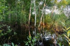 De overstroomde bezinningen van de bosbomenzonsondergang over water Stock Foto