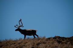 De Overweldigende Schoonheid van de Godthul-landschappen Stock Foto's