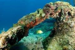 De Overwelfde galerij van het koraal Stock Foto