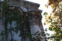 De overwoekerde ruïnes van het de zomertheater stock foto's