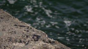 De overzeese golfbreker wordt gewassen door golven in langzame motie stock video