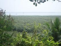 De overzeese kant van het mangrovebos en Stock Afbeeldingen