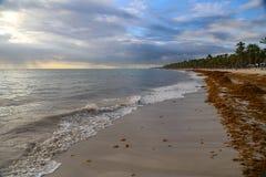 De overzeese kelp is vastgelopen op de stranden royalty-vrije stock foto's