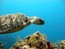 De overzeese schildpad glijdt over een mooi koraalrif Royalty-vrije Stock Foto