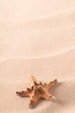 De overzeese stervissen op zand van een idyllische tropische beacha spelen vissen op zand van een idyllisch tropisch strand mee stock afbeelding