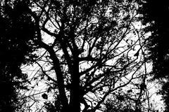De overzichten van de bomen royalty-vrije stock foto's