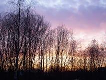 De overzichten van de bomen bij de achtergrond van de zonsonderganghemel stock foto's
