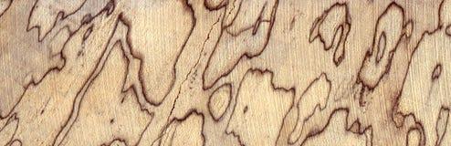 De overzichten van luipaardvlekken spalted hout stock fotografie