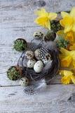 De Pâques toujours durée avec des oeufs de caille Images libres de droits