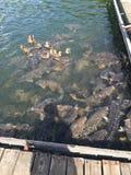 De PA van het Raystownmeer Royalty-vrije Stock Afbeelding