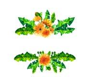 De paardebloembloemen van de waterverflente, bloesemskader op witte achtergrond wordt geïsoleerd die Stock Afbeeldingen
