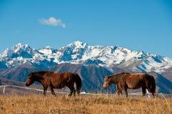De paarden Stock Afbeelding