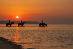 De paarden baden in het overzees bij dageraad Achtergrond van de mooie hemel en de zonsopgang Stock Foto