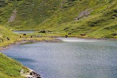 De paarden bevinden zich dichtbij het meer stock afbeeldingen