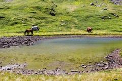De paarden bevinden zich dichtbij het meer stock foto