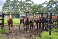De paarden bij drijven deur bijeen stock foto