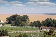 De paarden drijven binnen op landbouwbedrijf bijeen Stock Afbeelding