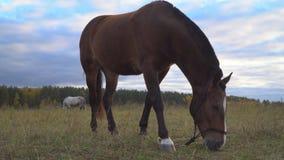 De paarden op de de herfstweide stock videobeelden
