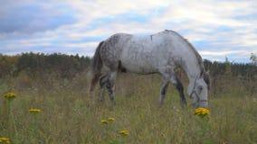 De paarden op de de herfstweide stock footage