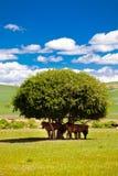 De paarden op het weiland genieten van koel Royalty-vrije Stock Foto's