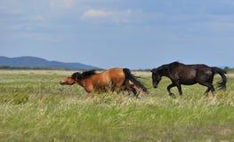 De paarden stoeien op een weiland Stock Fotografie