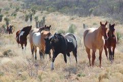 De Paarden van de boerderij Royalty-vrije Stock Foto
