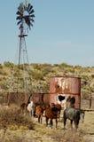 De Paarden van de boerderij Stock Afbeeldingen