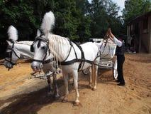 De paarden van de mensenuitrusting Stock Afbeeldingen
