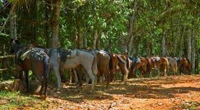 De paarden van de sleep Stock Afbeeldingen