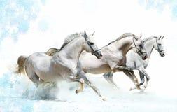 De paarden van de winter Stock Afbeeldingen