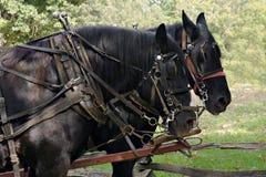 De Paarden van het ontwerp stock foto's