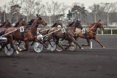 De paarden van het ras stock fotografie