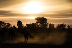 De paarden van het silhouet Stock Afbeelding