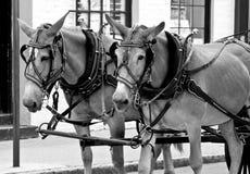 De Paarden van het werk Stock Afbeelding